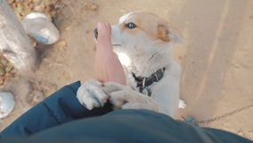 Uomo che segna la fine della testa di cane sulla vista in prima persona l'uomo sta segnando il cane amicizia fra il cane e l'amor stock footage