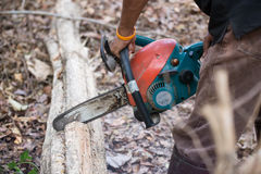 Uomo che taglia il legno con la motosega Immagine Stock
