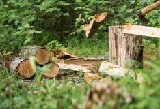 Uomo che taglia legno a pezzi nella foresta Immagine Stock Libera da Diritti