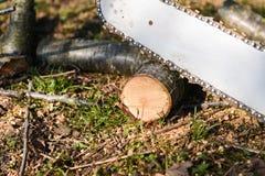 Uomo che taglia pezzo di legno con la motosega Immagine Stock