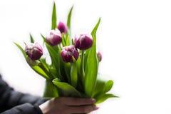 Uomo che tiene i tulipani rosa Modello della carta di regalo, manifesto o cartolina d'auguri - equipaggi il mazzo della tenuta de Immagini Stock