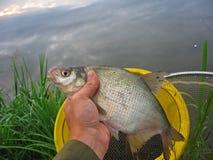 Uomo che tiene un pesce Fotografia Stock Libera da Diritti