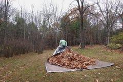 Uomo che tira tela cerata con leaves_1 Fotografie Stock