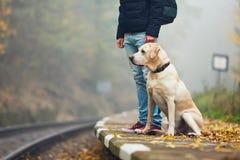 Uomo che viaggia con il suo cane in treno fotografia stock