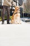 Uomo cieco con il cane guida sul marciapiede Fotografia Stock