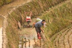Uomo cinese nelle risaie, risaie pistole del selettore rotante del truda-, passeggiata-dietro il trattore Immagini Stock
