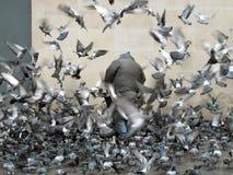 Uomo circondato dai piccioni, Parigi, Francia, 2012 Fotografia Stock