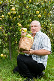Uomo con   canestro in pieno delle mele Immagini Stock