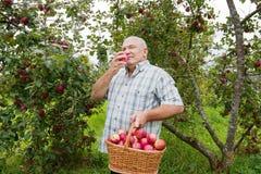 Uomo con   canestro in pieno delle mele Fotografia Stock