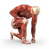 Uomo con i muscoli visibili con il percorso di residuo della potatura meccanica Fotografia Stock