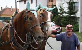 Uomo con i suoi cavalli Fotografia Stock