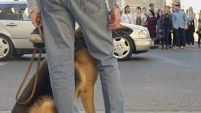 Uomo con il cane fedele sul guinzaglio che aspetta per attraversare via, traffico cittadino intensivo archivi video