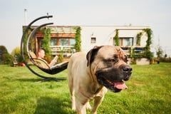 Uomo con il cane sul giardino Fotografie Stock Libere da Diritti