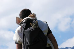 Uomo con il gatto fotografie stock libere da diritti