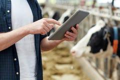 Uomo con il pc e le mucche della compressa sull'azienda lattiera Immagine Stock