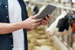Uomo con il pc e le mucche della compressa sull'azienda lattiera fotografie stock