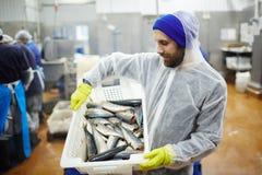 Uomo con il pesce Immagine Stock