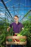 Uomo con la casella di verdure fotografia stock libera da diritti