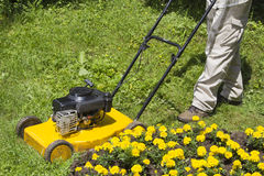 Uomo con la falciatrice da giardino gialla immagine stock