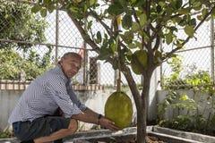 Uomo con la frutta del durian Immagine Stock Libera da Diritti