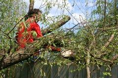 Uomo con la sega a catena nell'albero di salice caduto Immagine Stock
