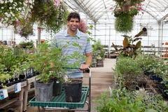 Uomo con le piante conservate in vaso sul carrello Fotografia Stock