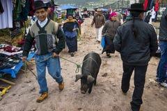Uomo con un maiale al mercato del bestiame della città di Otavalo nell'Ecuador Fotografie Stock Libere da Diritti