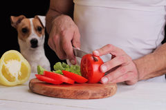 Uomo in cucina che prepara cena, pasto, insalata, con la sorveglianza del cane Immagine divertente Concetto vegetariano degli ani Immagini Stock Libere da Diritti