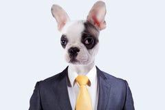 Uomo d'affari con un fronte del cane Fotografia Stock