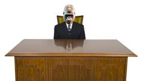 Uomo d'affari della gorilla, scrivania di affari isolata Fotografia Stock