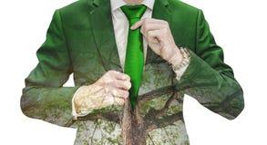 Uomo d'affari di doppia esposizione che lega cravatta verde e grande albero Fotografie Stock Libere da Diritti