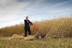 Uomo d'affari nel campo di frumento Immagini Stock Libere da Diritti