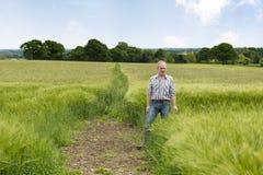 Uomo da un campo verde enorme dell'azienda agricola Immagine Stock Libera da Diritti