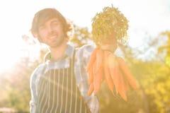 Uomo del giardiniere che tiene un mazzo di carote Fotografia Stock