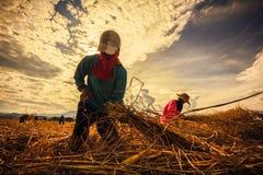 Uomo del raccolto Fotografie Stock