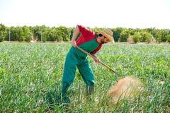 Uomo dell'agricoltore che lavora nel frutteto della cipolla con la zappa Fotografia Stock