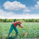Uomo dell'agricoltore che lavora nel frutteto della cipolla con la zappa Immagini Stock