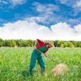 Uomo dell'agricoltore che lavora nel frutteto della cipolla con la zappa Fotografie Stock