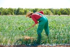 Uomo dell'agricoltore che lavora nel frutteto della cipolla con la zappa Fotografie Stock Libere da Diritti