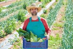 Uomo dell'agricoltore che raccoglie le verdure in frutteto Fotografia Stock Libera da Diritti