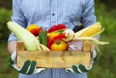 Uomo dell'agricoltore che tiene gli ortaggi freschi riempiti della scatola di legno Immagini Stock Libere da Diritti