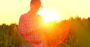 Uomo dell'agricoltore colto o analisi un rapporto in computer della compressa su un campo di agricoltura con il tono d'annata su  video d archivio