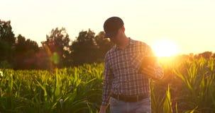 Uomo dell'agricoltore con la compressa nel campo Compressa graziosa della tenuta della giovane donna nel campo al tramonto archivi video