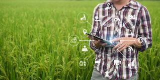 Uomo dell'agricoltore di tecnologia di agricoltura che per mezzo del computer della compressa immagini stock libere da diritti