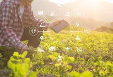 Uomo dell'agricoltore di tecnologia di agricoltura che per mezzo del computer della compressa Fotografie Stock