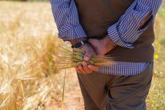 Uomo dell'agricoltore o dell'agricoltore che tiene alcune orecchie del grano fotografie stock libere da diritti