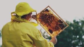 Uomo dell'apicoltore che controlla struttura di legno prima della raccolta del miele in arnia il giorno soleggiato Fotografia Stock