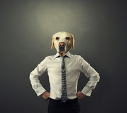 Uomo dell'uomo d'affari con la testa del cane Fotografia Stock Libera da Diritti