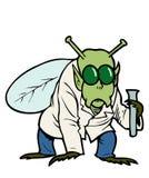 uomo della mosca Fotografia Stock