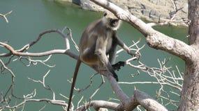 Uomo della scimmia fotografia stock